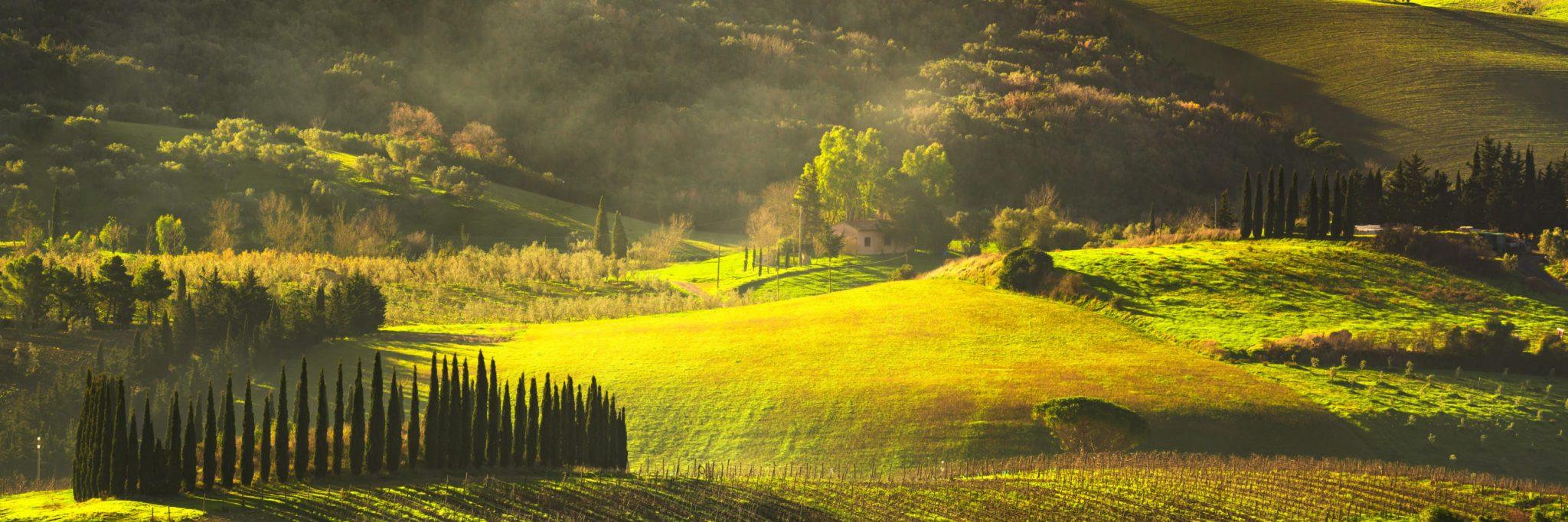 Maremma countryside, sunrise foggy landscape, vineyards, rolling hills and trees. Bibbona, Tuscany, Italy. Europe.
